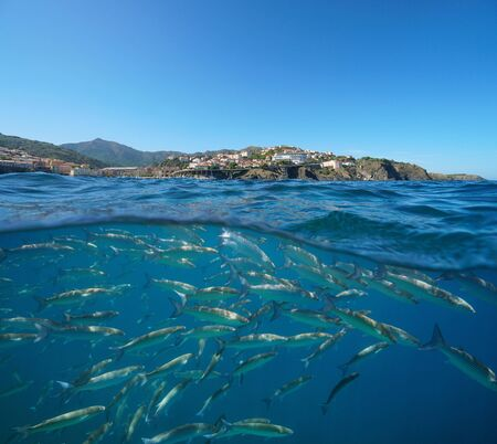 France, Mediterranean coastline near Cerbere town with a school of fish underwater sea, Pyrenees-Orientales, Occitanie, split view over and under water surface