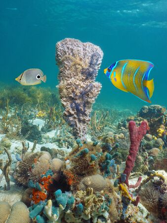 Caribbean sea marine life underwater, sponge with brittle stars and tropical fish in a coral reef