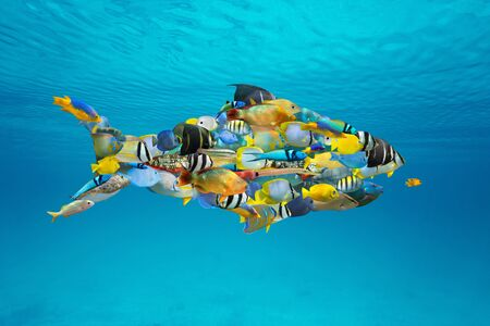 School of colorful Caribbean tropical fish grouped together into a shark shape (digitally composed) in the sea under water surface