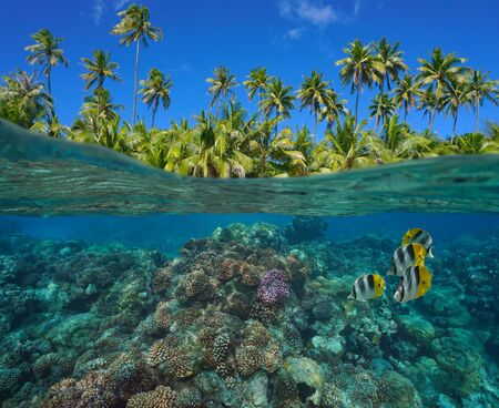 Coral reef with tropical fish underwater and green foliage of coconut palm trees, split view over and under water surface, French Polynesia, Pacific ocean, Oceania
