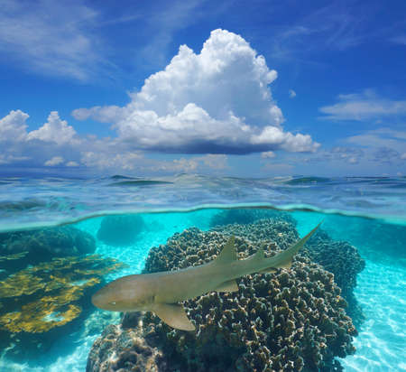 Tropical seascape, blue sky with cloud and corals with a nurse shark underwater, split view over and under water surface, Caribbean sea, Panama, Central America