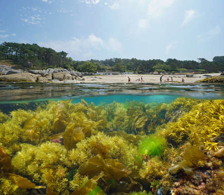 Spain beach on the coast of Galicia and seaweeds underwater, split view over and under water surface, Atlantic ocean, Bueu, province of Pontevedra, Praia de Lagos