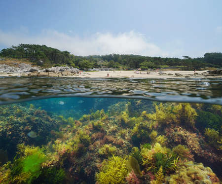 Spain Galicia coastline, beach and seaweeds underwater, split view over and under water surface, Atlantic ocean, Bueu, province of Pontevedra, Praia de Lagos
