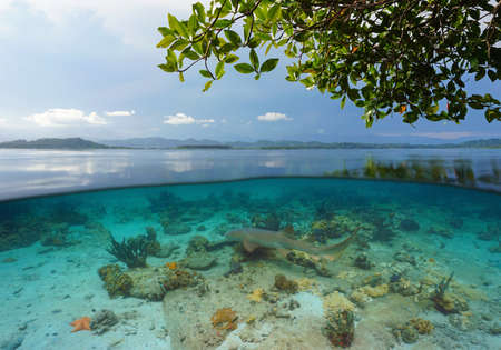 Tropical seascape over and under water surface with a nurse shark, Caribbean sea