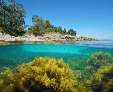 Atlantic coast of Galicia in Spain with algae in the ocean, split view over and under water surface, Bueu, Pontevedra province