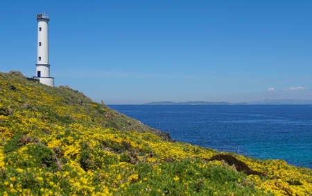 Lighthouse with gorse in flower on the coast of Galicia in Spain, Atlantic ocean, Pontevedra province, Cangas, Cabo Home