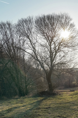 Early spring, sun light in the tree branches
