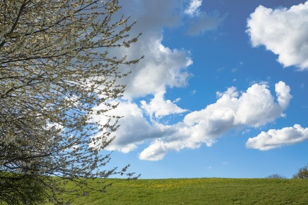 Spring, tree in flowers, green field and white clouds in the blue  sky in Austria Stock Photo