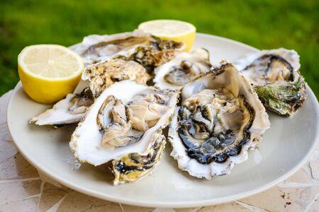 Oysters ready to eat Фото со стока