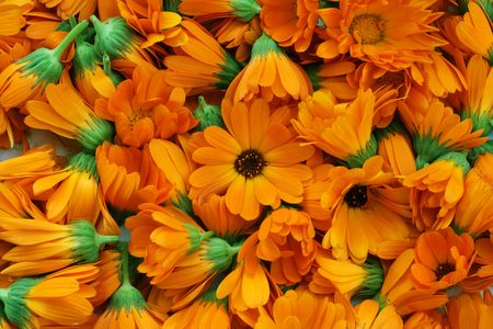 tree marigold: It is a lot of flowers of a medicinal calendula. Flowers are collected that them to dry up and use in medicine.
