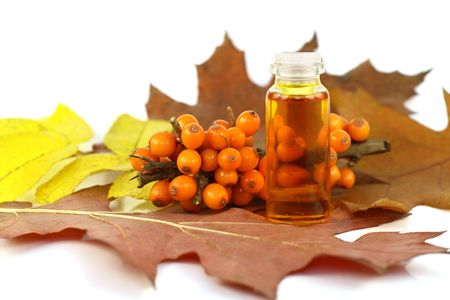 These are ripe orange berries of sea-buckthorn berries and the medical oil made of stones of sea-buckthorn berries. This oil possesses tremendous medical effect and is actively used in pharmacology. Berries ripen in the late autumn, therefore on the image