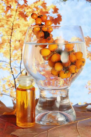 autmn: Oil from sea-buckthorn berrieis  used in medicine. Autmn forest on background.