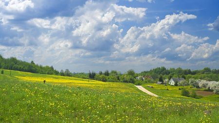 Field of yellow flowers, may  landscape Stock Photo - 7577242