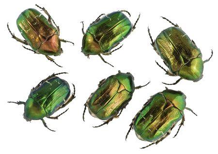 Six emerald gold bugs