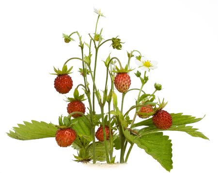 The wood wild strawberry berries. Isolated on white.  photo