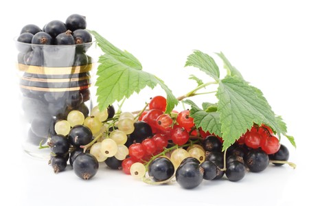 Black, red, white currant berries. Isolated on white.  photo