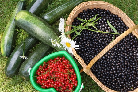 Currant berries in baskets on grass photo