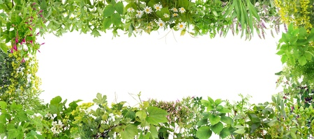 Green  banner collage frame from plants. Isolated on white