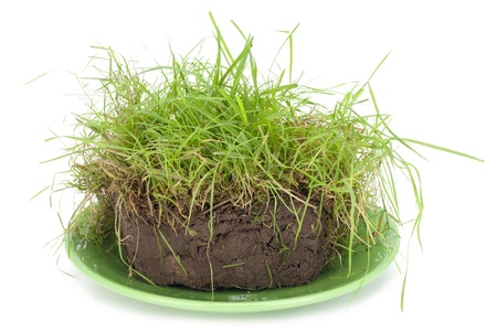 piece of a pie from turf, compost with a green grass lies on a plate. Isolated  photo