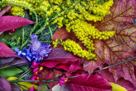 Background from autumnforest  leaves and fruits  photo