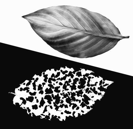 life after death: Before and after  The life and death  Black and white image concept collage from leaves