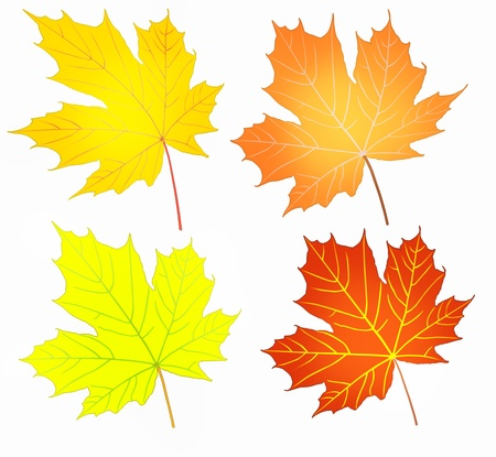 Autumn apstract maple leaves set illustration  Stock Illustration - 12996851