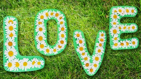 Love summer word from wild camomiles on green grass