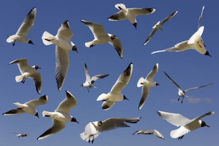 sulight: River spring gulls flying in blue sky. Sunny day. Selective focus
