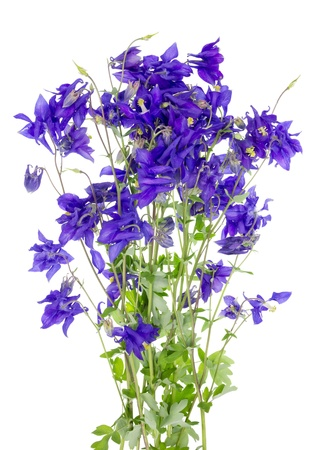 Blue isolated spring floral fireworks concept photo