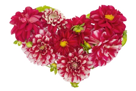 Bloody floral isolated heart concept from red summer dahlias flowers with buds photo