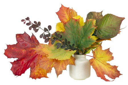 number 12: minimalistic  bouquet number 12 - autumn maple tree leaves   in ceramic pot vase isolated. Selective focus