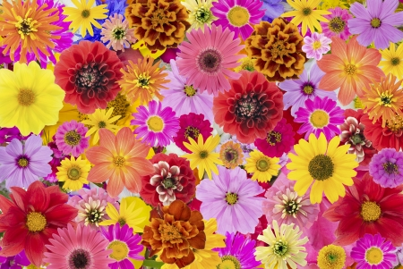 flowers background: Floral chaos abstract collage from simple summer flowers background