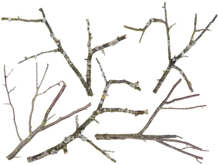 dead tree: Branches and twigs are cut off from an old  apple and cherries tree set. On branches the moss and a lichen grows. Isolated