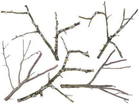 toter baum: Äste und Zweige werden aus einem alten Apfel-und Kirschen Baum Satz geschnitten. Auf Zweigniederlassungen das Moos und eine Flechte wächst. Isoliert Lizenzfreie Bilder