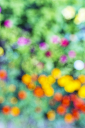French marigolds garden flowers bokeh. Abstract art soft background of multicolored real natural  spots from plants. Bright solar sunny day  photo
