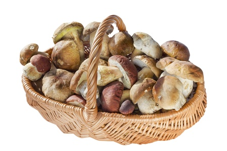 porcini: Willow wicker basket with real wild forest mushrooms-  porcini. On fungi have spores, dust and dirt. Sunny day image. Isolated.