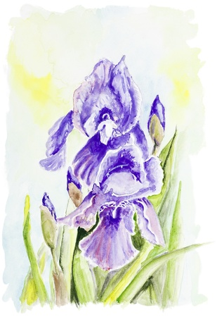 Irises blue  spring flowers bush agains the sky isolated- handmade watercolor  painting illustration on a white paper art background illustration