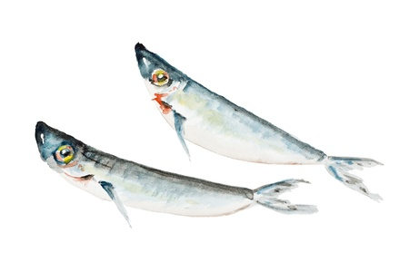 sardine: Two small dead saltwater sardine fish to fry isolated- handmade watercolor painting illustration on a white paper art background Stock Photo