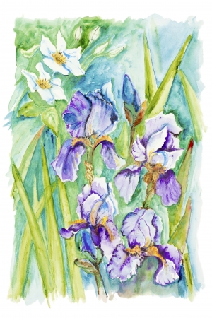 Narcissus and irises spring   flowers against the sky isolated - handmade watercolor  painting illustration on a white paper art background illustration