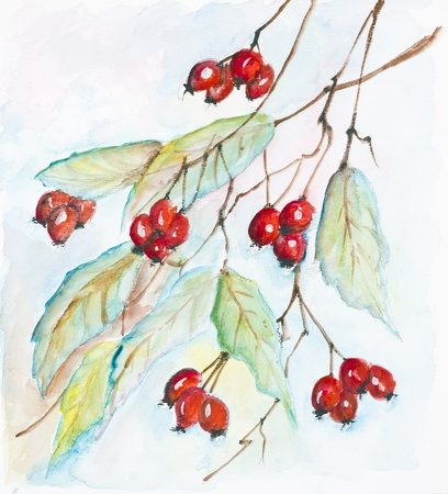 First frosts. Red berries of a hawthorn against the autumn sky- handmade watercolor painting illustration on a white paper art background Stock Photo