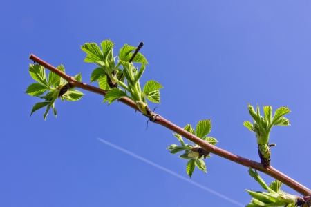 inversion: Spring branch and jet inversion trace in blue sky