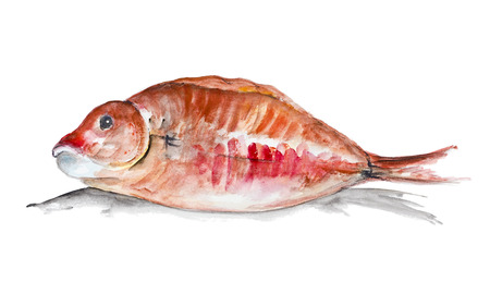 roasting: Red grouper  fish lies on the table ready for roasting  isolated. Handmade watercolor painting illustration on a white paper art background