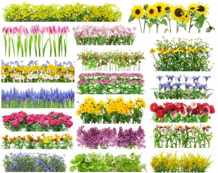 buisson: Fleurs d'été lit et de fleurs des frontières définies collage Banque d'images