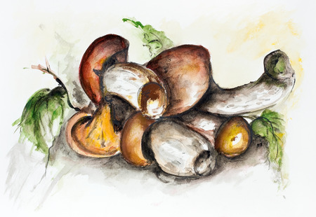 Edible wild autumn forest mushrooms -  handmade watercolor  painting illustration on a white paper art background Stok Fotoğraf