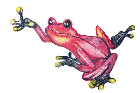 Red poison dart frog from Southern America isolated -  handmade watercolor  painting illustration on a white paper art background Stock Photo