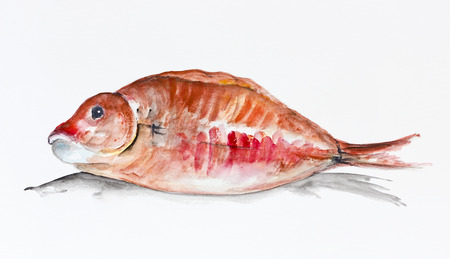 Red grouper  fish lies on the table ready for roasting  isolated. Handmade watercolor painting illustration on a white paper art background  illustration
