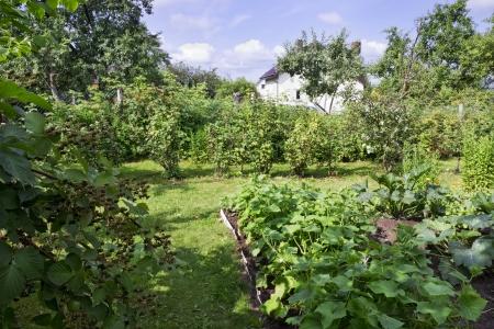 Beautiful Summer Green Sunny Garden Landscape. Selective Art.. Stock ...