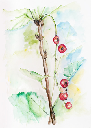 Last autumn berries concept-  handmade watercolor painting illustration on a white paper art background illustration