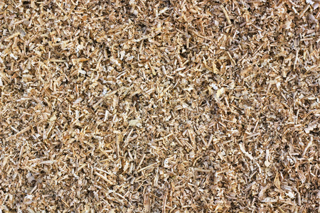 carpenter's sawdust: Yellow pine sawdust background textures closeup