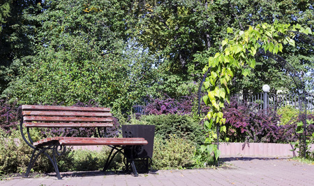 rest day: Wooden bench for rest in city park. Sunny autumn day. Selective focus